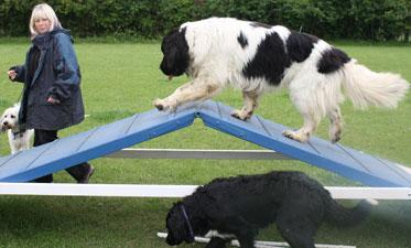 dog-behaviour-maintenance-1