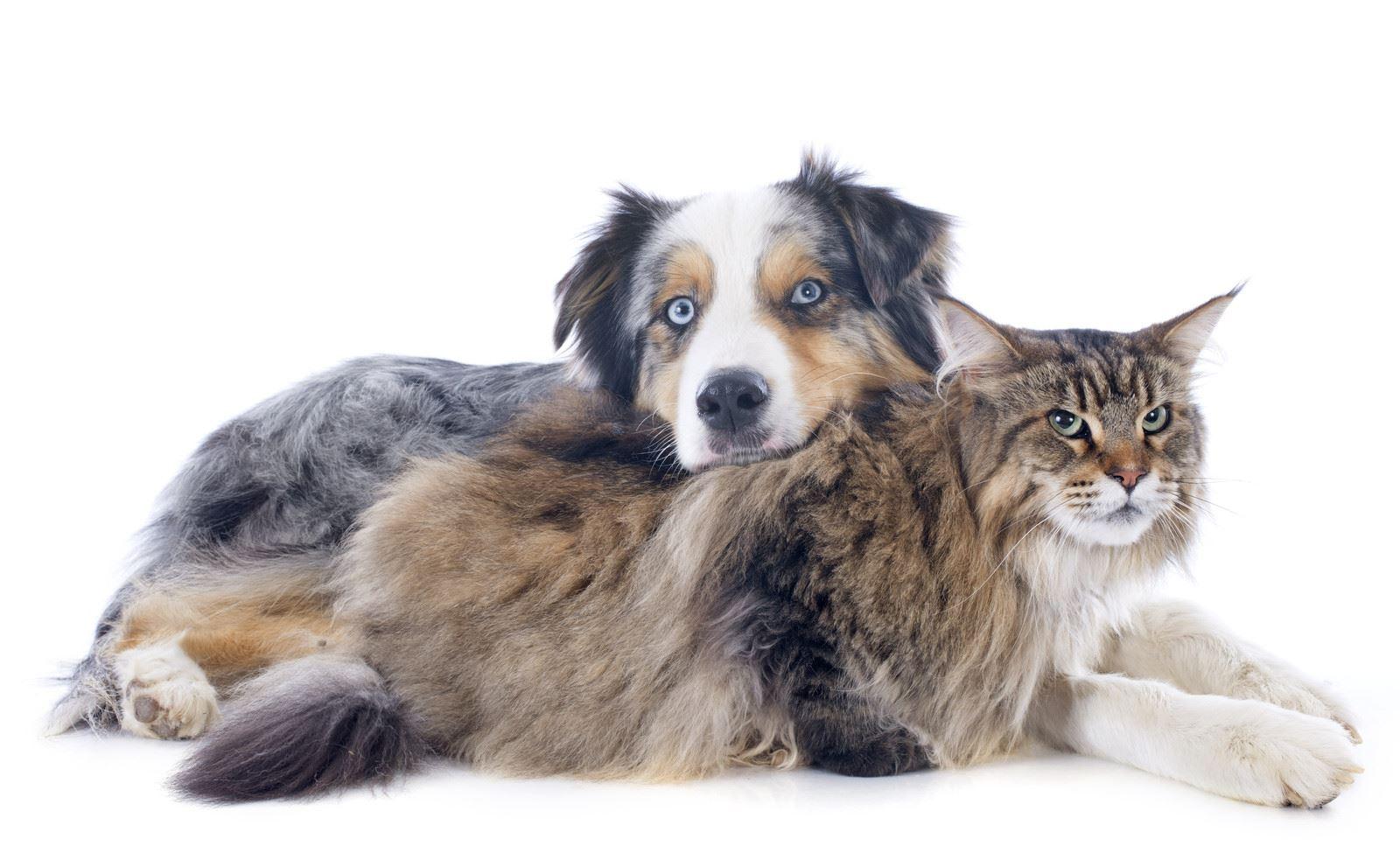 Cat Dog Body Language