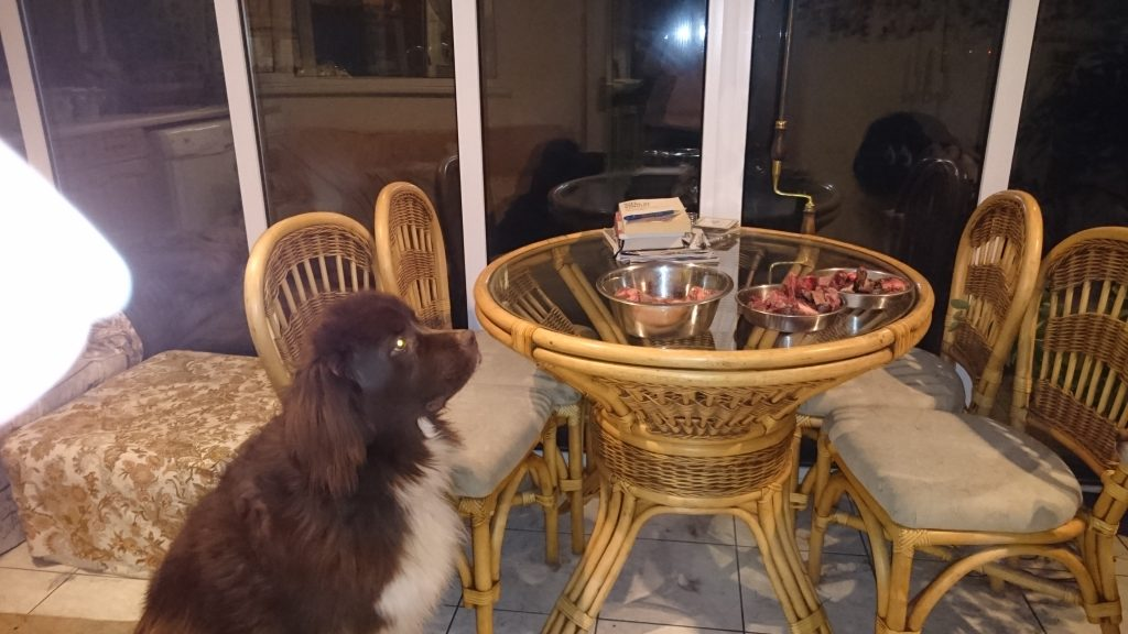 Mand or Manding with Daz.  he is a Brown newfoundland who has a number of different mands to communicate what he wants.  here he looks at the food and then looks at me to tell me he wants the food.