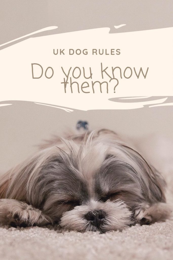 The Rules - Do you know the UK Rules and Laws relating to your dog? The image shows a cute dogs asleep on a rug.  The text is: UK Dog Rules.  Do you know them?